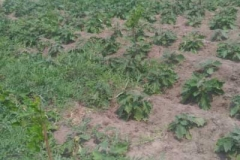 farmland land sale in ecr